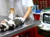 Vet Care Clinic - endoscopie