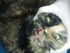 vetcareclinic_gripa_pisicii_4