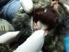 vetcareclinic_gripa_pisicii_7