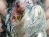 vet care clinic - povestea sandrei porumbel 4