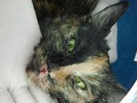 Gripa pisicii / Prezentare caz Vet Care Clinic