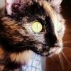 Pisica Sophie – o poveste cu inceput fericit