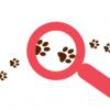 Identificarea cainilor cu stapan prin microcipare