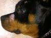 vetcareclinic-cabinet-veterinar-demodecia-6